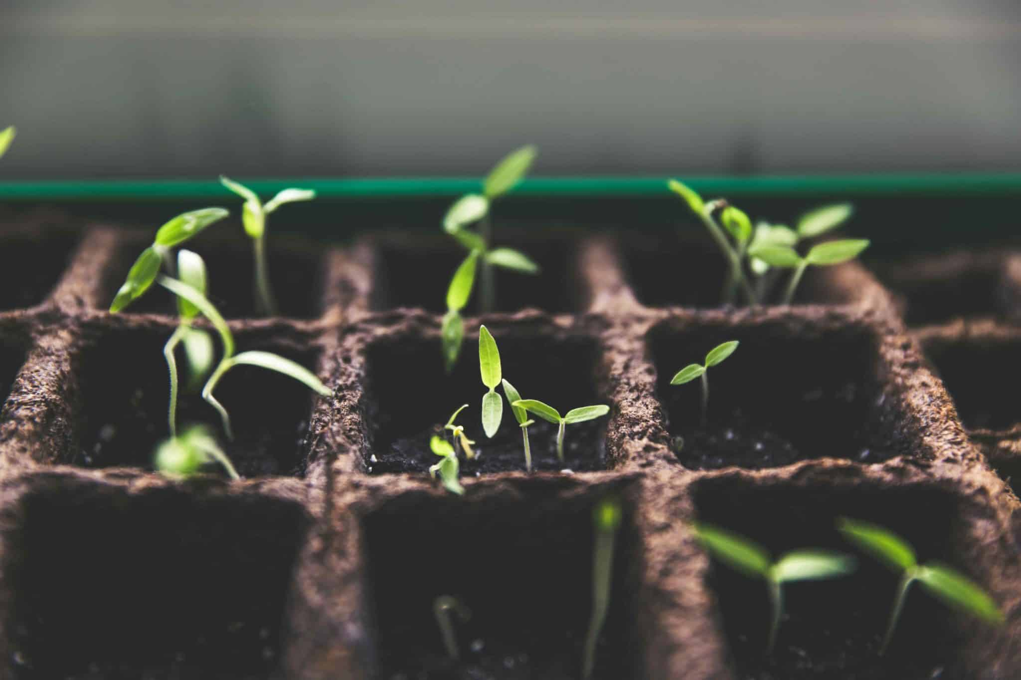 Picture of Seedlings in the beginning