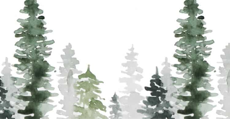 Water Color of Pine Trees