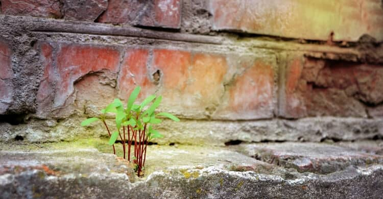 Plant growing through concrete